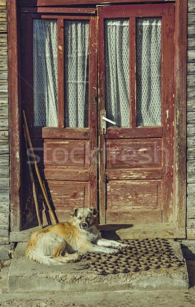 álmos őrkutya kutya pihen lépcsősor kívül Stock fotó © photosebia