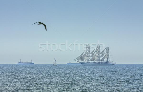 Pływające mewa wysoki statku pejzaż morski trzy Zdjęcia stock © photosebia