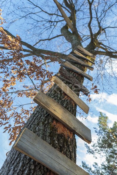 Fa létra fából készült magas függőleges égbolt Stock fotó © photosebia
