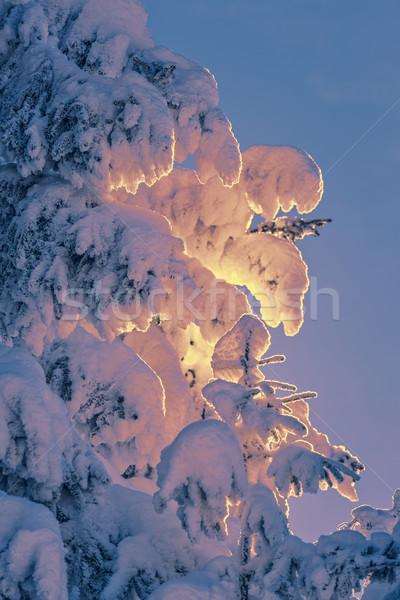 снега закат свет заморожены Сток-фото © photosebia