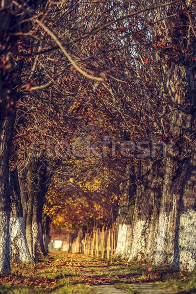 Zdjęcia stock: Jesienią · krajobraz · aleja · pokryty · wyschnięcia · brązowy