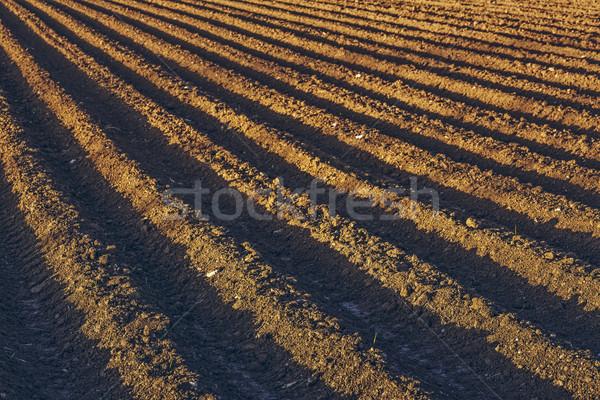 Plowed potatoe field Stock photo © photosebia