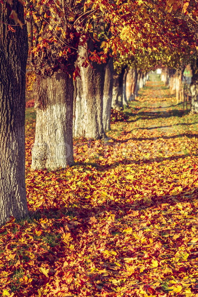 Najaar steegje scène gedekt tapijt kleurrijk Stockfoto © photosebia