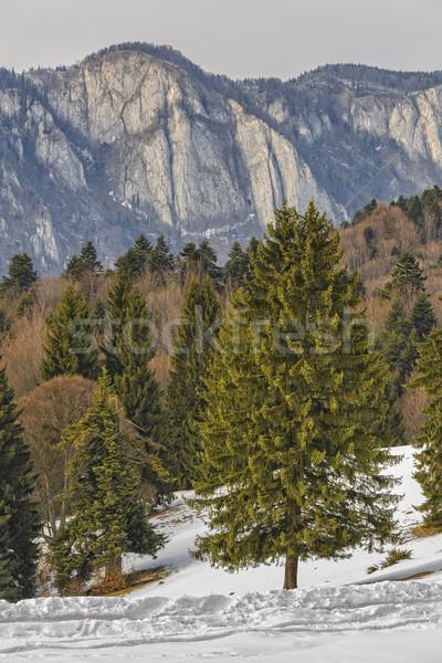 Montagnes hiver paysage mixte forêt matin Photo stock © photosebia