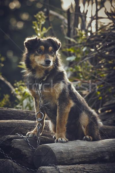 Smutne psa zaniedbany ognia Zdjęcia stock © photosebia