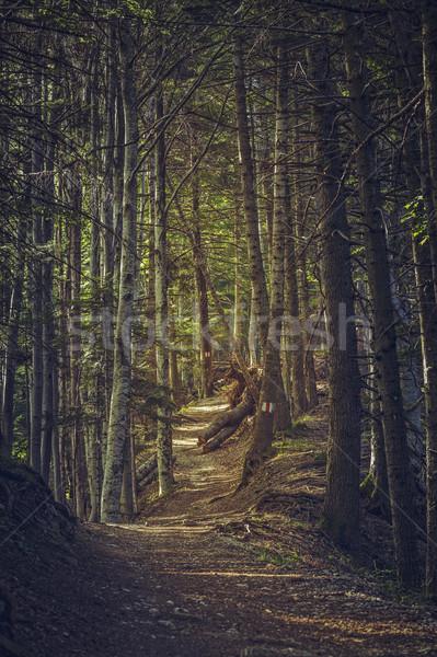 Forêt sentier paisible ensoleillée paysages Photo stock © photosebia