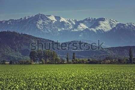 зеленый зерновых области гор весны пейзаж Сток-фото © photosebia