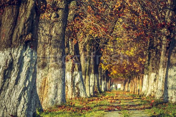 Spokojny jesienią krajobraz aleja pokryty wyschnięcia Zdjęcia stock © photosebia