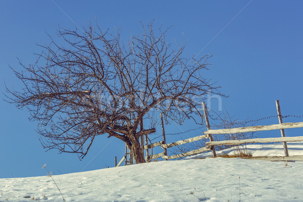 Leafless tree and rustic fence Stock photo © photosebia