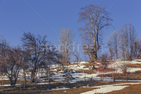 Leafless trees landscape Stock photo © photosebia