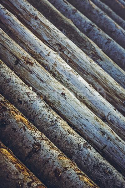 Tűzifa boglya közelkép terméketlen fa alsónadrágok Stock fotó © photosebia