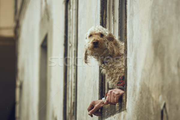 Dog with human hands illusion Stock photo © photosebia