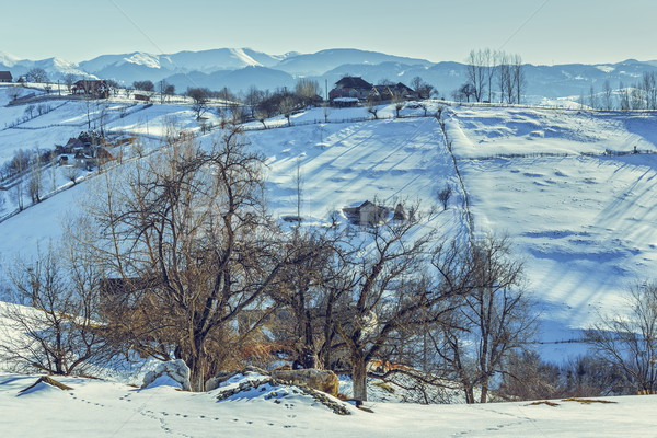 Winter rural landscape Stock photo © photosebia