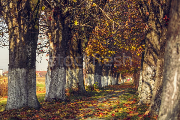 Serene autumn landscape Stock photo © photosebia