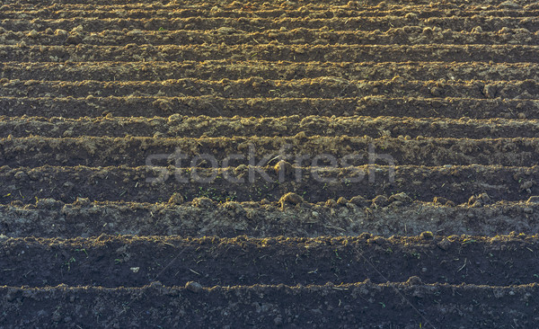Furrows rows pattern Stock photo © photosebia