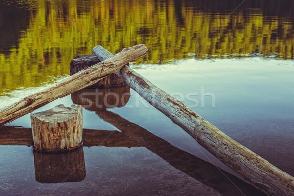 Stillness, bare tree trunks fallen in the water Stock photo © photosebia