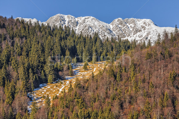 Piatra Craiului National Park, Romania Stock photo © photosebia