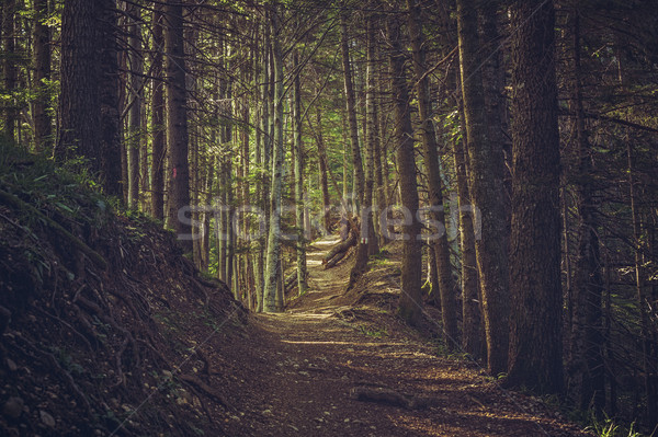 Hike path in the woods Stock photo © photosebia
