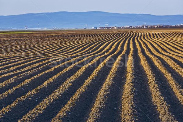 Furrows rows in potatoes field Stock photo © photosebia