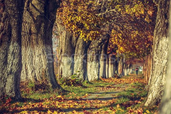 Сток-фото: безмятежный · осень · пейзаж · аллеи · покрытый · высушите