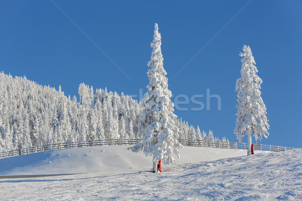 Alpine winter landscape Stock photo © photosebia