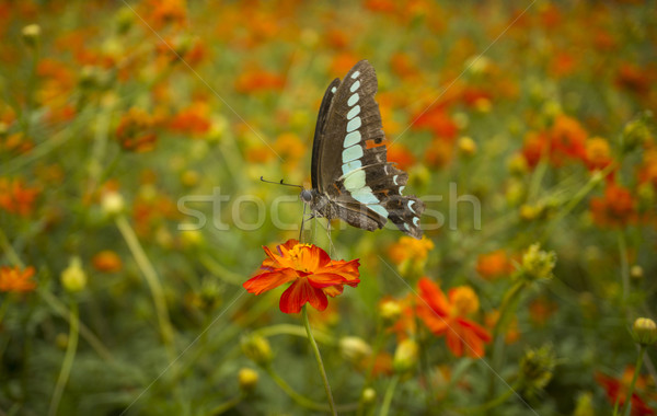 Butterfly Stock photo © photosil