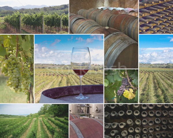 Vineyards and Wineries Stock photo © photosil