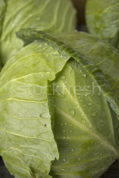 капуста капли воды воды здоровья зеленый Сток-фото © photosil