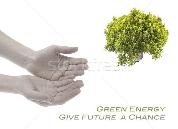 Groene energie handen gloeilamp ecologie milieu lamp Stockfoto © photosil