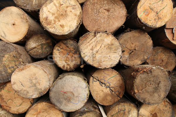 Log wood texture backgrounds Stock photo © photosoup