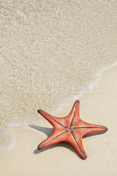 Star balık plaj beyaz su Stok fotoğraf © photosoup