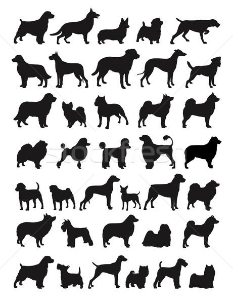 Népszerű kutya sziluettek állatok kutyakölyök boxoló Stock fotó © photosoup