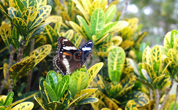 Butterfly in a tropical garden Stock photo © photosoup