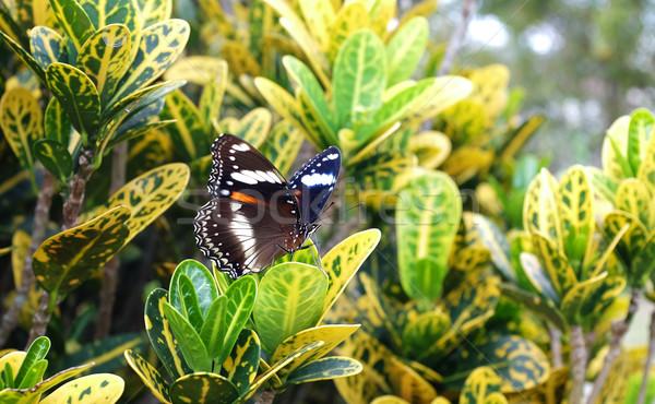 Motyl tropikalnych ogród kwiat liści życia Zdjęcia stock © photosoup