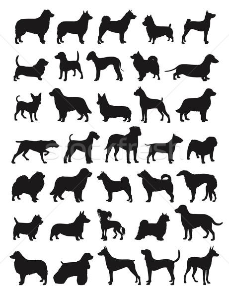 Népszerű kutya sok fajok sziluettek állatok Stock fotó © photosoup