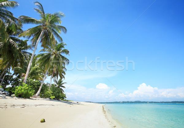 Trópusi tengerpart pálmafák trópusi fehér homokos tengerpart tengerpart Stock fotó © photosoup