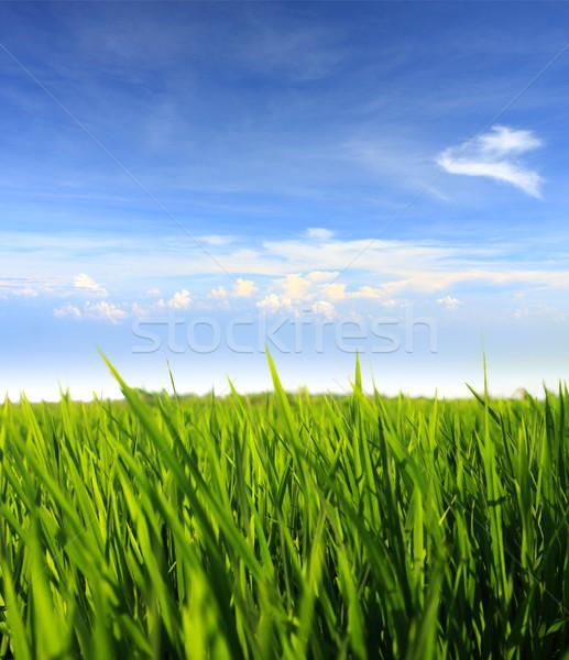 Zöld fű kék ég mező felhők fű természet Stock fotó © photosoup