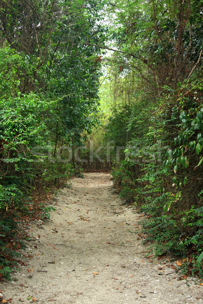 Photo stock: Naturelles · marche · chemin · jardin · route · nature
