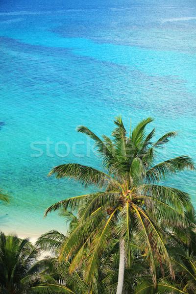 ヤシの木 海 熱帯 風景 ヤシの木 ビーチ ストックフォト © photosoup