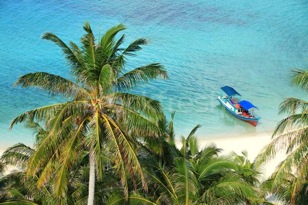 Festői trópusi édenkert tengerpart kilátás kókuszpálma Stock fotó © photosoup