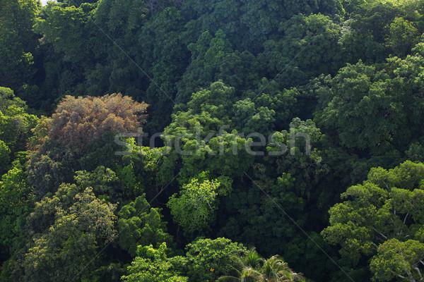 Magasról fotózva lövés erdő légi természetes esőerdő Stock fotó © photosoup