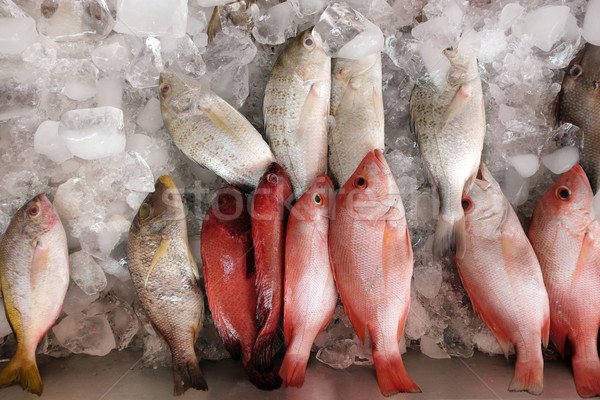 Assorted fresh fish stored on ice Stock photo © photosoup