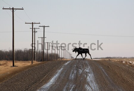 Três masculino campo cor animal caça Foto stock © pictureguy