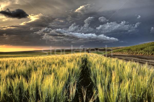 Nuages d'orage saskatchewan coucher du soleil blé champs ciel Photo stock © pictureguy