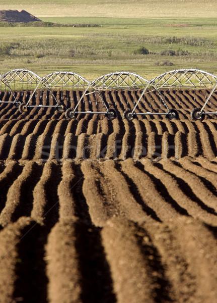 Zaden Canada irrigatie handen Stockfoto © pictureguy
