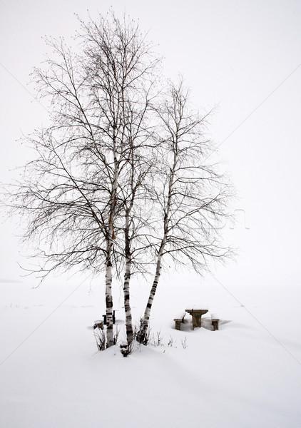 Aspen Trees Canada Stock photo © pictureguy