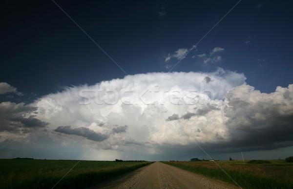 Saskatchewan cielo albero nubi Foto d'archivio © pictureguy