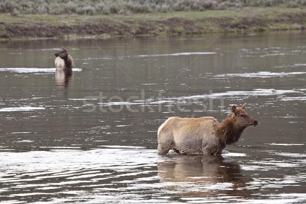 Yellowstone National Park Stock photo © pictureguy