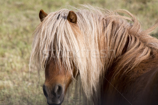 Horse in pasture close up Stock photo © pictureguy