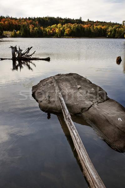 парка Онтарио осень осень цветами лес Сток-фото © pictureguy